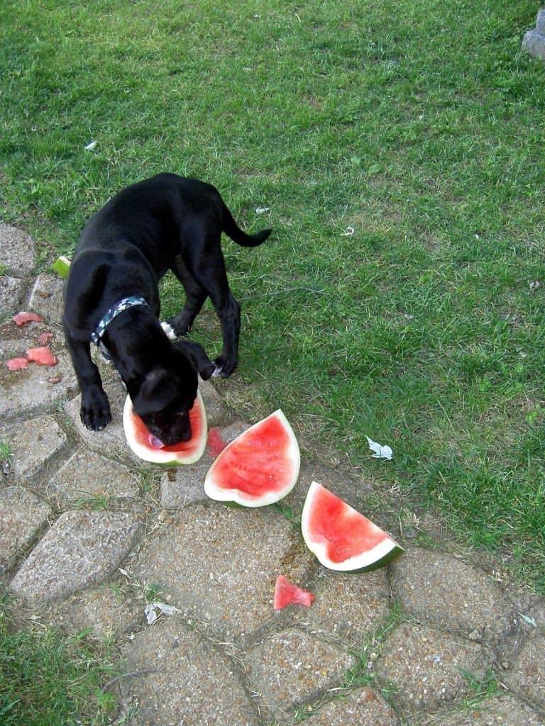 Mi perro no quiere comer pienso ¿qué puedo hacer? 2