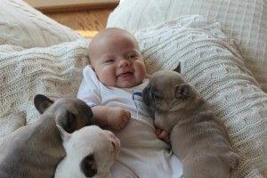 cachorros con bebe