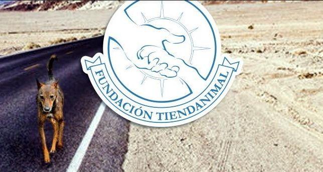 Fondo de alimentos de TiendAnimal, un idea genial para ayudar a las protectoras 2