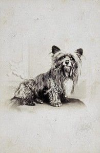 Historias con perro, hoy: Greyfiars Bobby