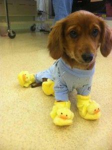 perro pijama