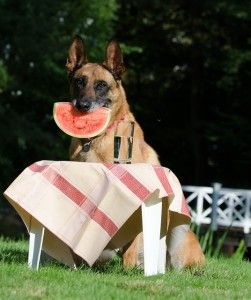 Los perros comen menos en verano
