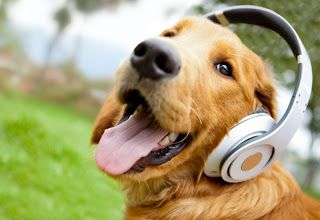 Música para perros