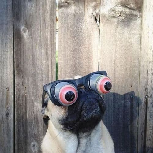 Humor perruno: imágenes divertidas de perros y cia III 1