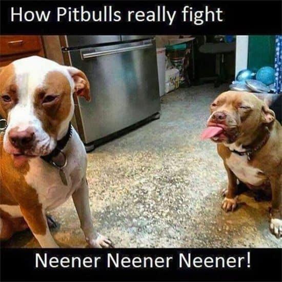 Humor perruno: imágenes divertidas de perros y cia IV 5