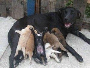 Cachorros mamando