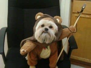 Disfraz Ewok