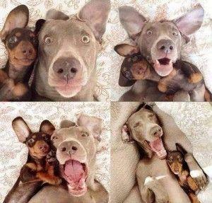 Porque a ellos también les divierte hacerse Selfies