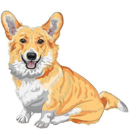 Razas de perros: Welsh Corgi
