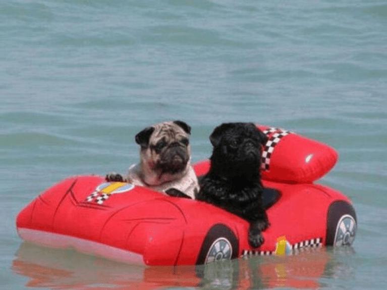 Humor perruno: imágenes divertidas de perros VI