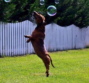 deporte con perro