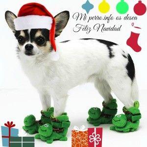Feliz Navidad amigos caninos