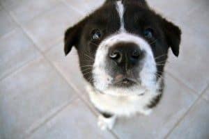 Tres malas conductas de tu perro que puedes corregir