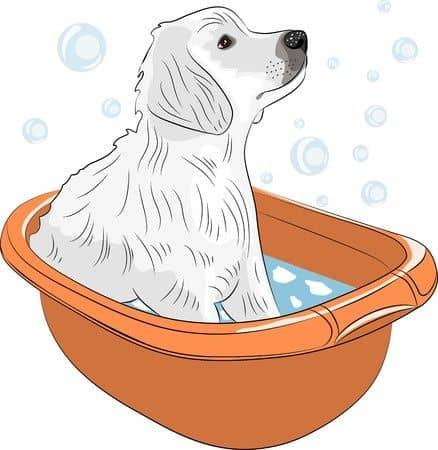 Cachorro bañándose