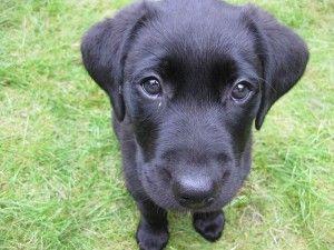 Síndrome del perro negro, una estupidez en la que seguimos cayendo