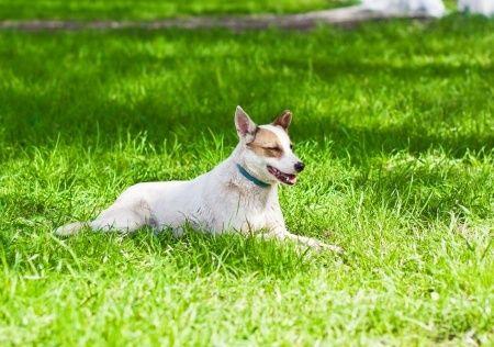 Perro tomando el sol