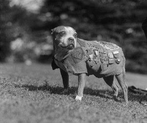 Historias con perro: Stubby, el perro que llegó a sargento