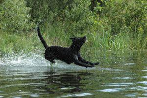 Como conseguir que tu perro pase un mejor verano