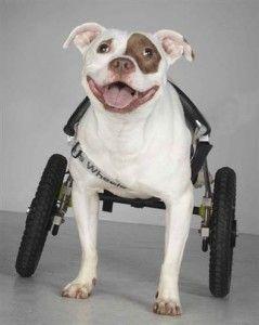 carritos para perros invalidos