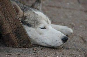 perro en tu sueño