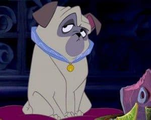 Perros estrella: Percy, el perro de Pocahontas