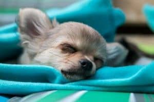 ¿Cuantas horas duermen los perros?