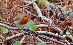 Como ayudar a sobrevivir a los pájaros silvestres en invierno