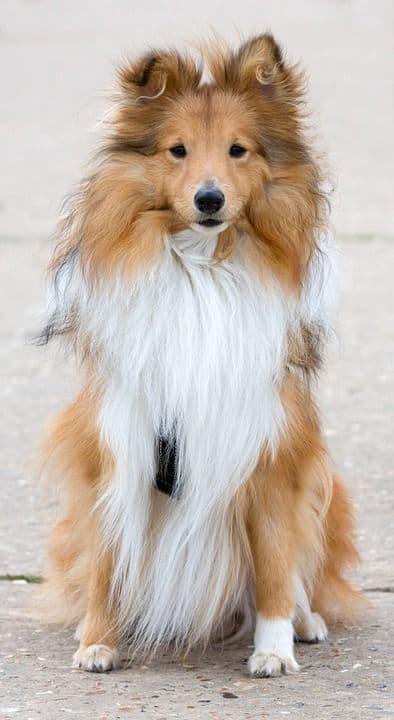 ¿Estás orgulloso de tu perro? 3