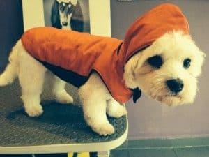 sacar al perro cuando llueve
