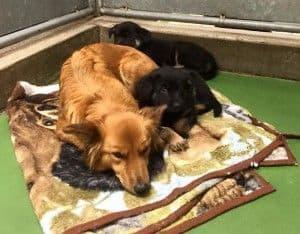 Historias con perro: Maggie, una perra muy solidaria
