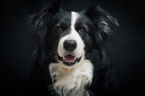El perro más inteligente del mundo