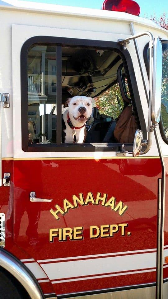 Historias con perro: Jake, el perro bombero