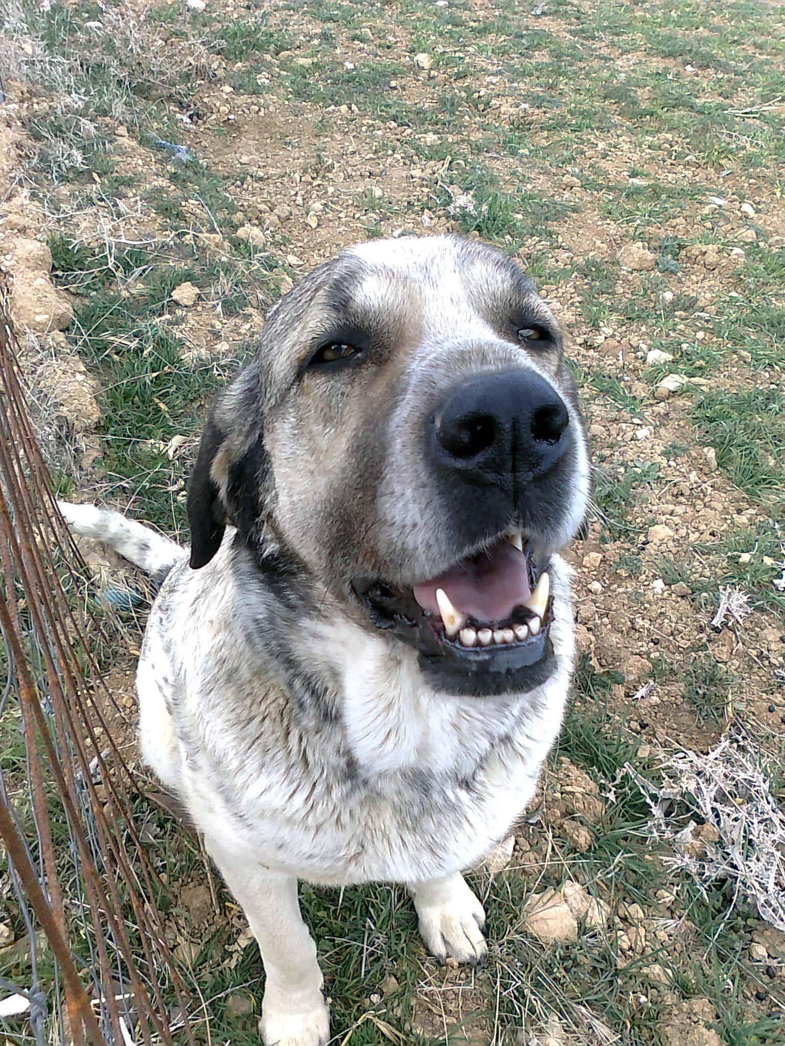 Historias con perro: Luna, mi mejor guardaespaldas