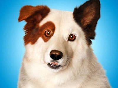 Perros estrella: Stan, el protagonista de Mi perro tiene un blog