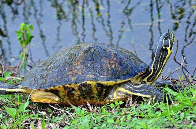 Tortuga Florida