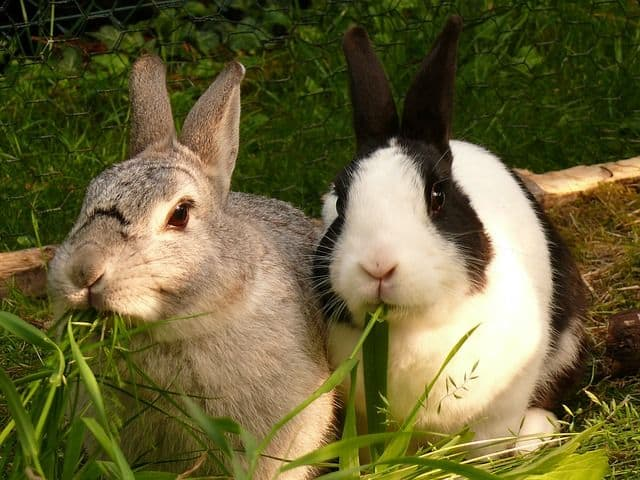 ¿Qué plantas son tóxicas para mi conejo?