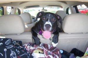 normativa viajar con perro en coche