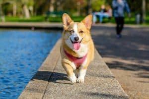 ¿Por qué los perros…? III