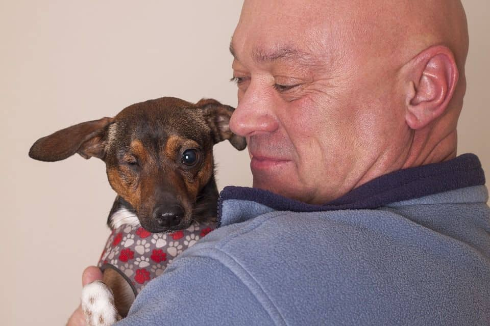 sintomas conjuntivitis canina