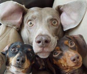 Los perros más famosos de Instagram