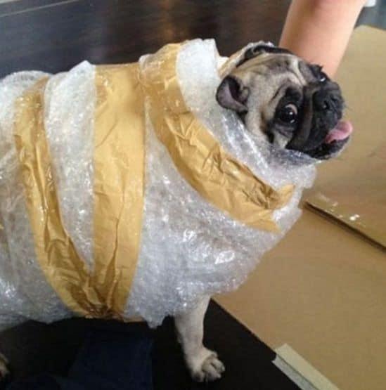 Humor perruno: imágenes divertidas de perros VIII 1
