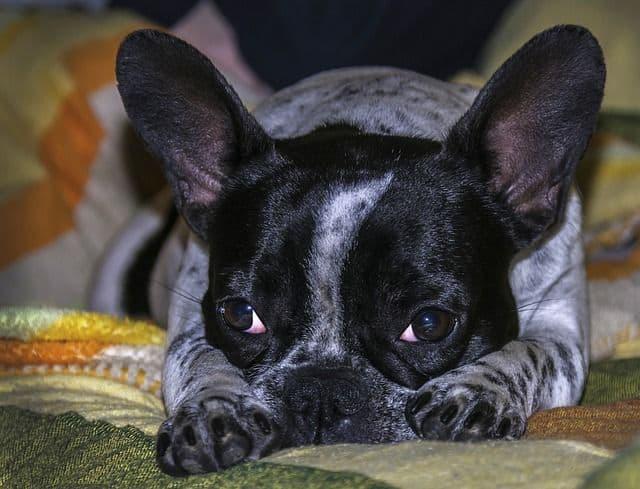 Evitar que mi perro se suba al sofá 1