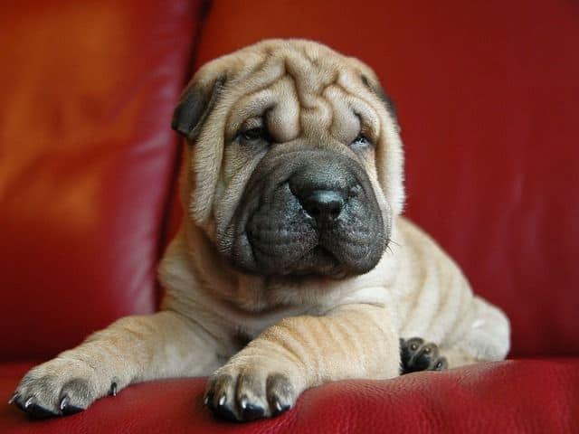 Evitar que mi perro se suba al sofá