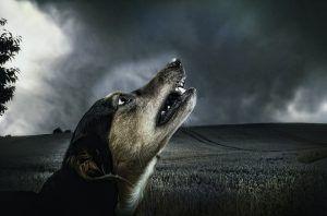 Soñar con perros
