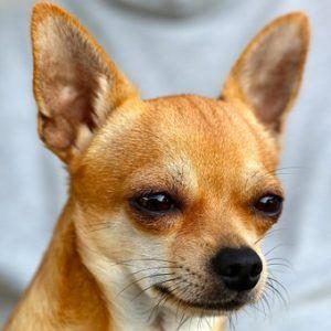 perros pequeños que nombre ponerles