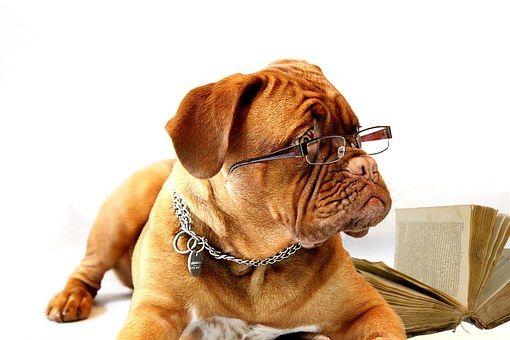 ¿Cómo elegir un buen nombre para tu perra?