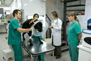 SURVET veterinarios