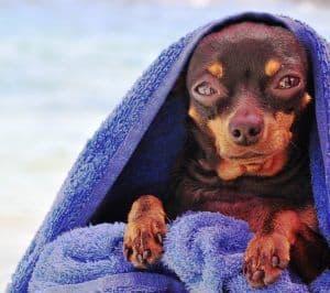 albornoz para perros