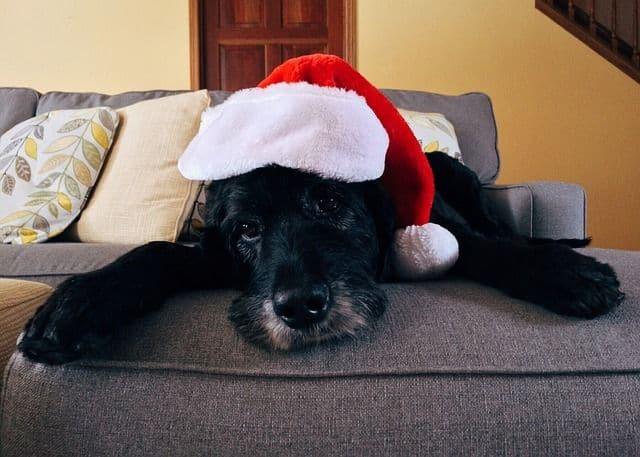 ¿Qué puede comer mi perro en Navidades?