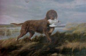 Caninos historicos listados como extintos